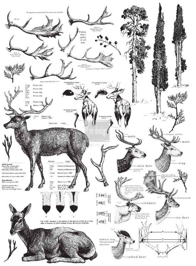 "Redesign Décor Transfers® - Deer size 23""x 33"""