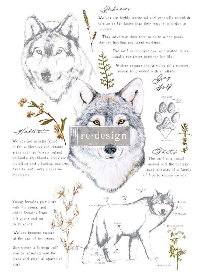 """Redesign Decor Transfers® - Gray Wolf - total sheet size 24""""x35"""", cut into 3 sheets"""