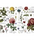 """Redesign Decor Transfers® - Vintage Botanical - total sheet size 48""""x35"""", cut into 6 sheets"""
