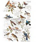 """Redesign Decor Transfers® - Postal Birds - total sheet size 24""""x35"""", cut into 3 sheets"""